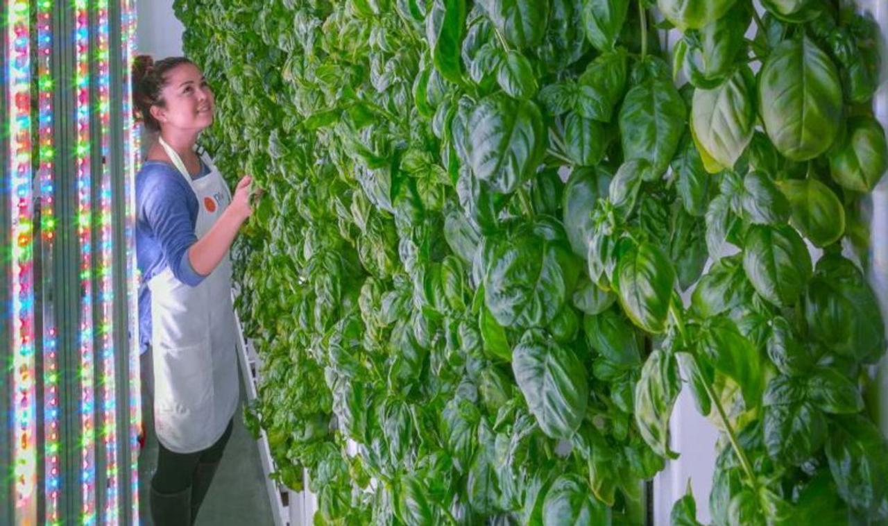 Вертикальная ферма, управляемая искусственным интеллектом, производит в 400 раз больше урожая, используя на 95% меньше воды