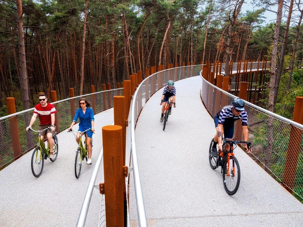 Необычный аттракцион: «Велосипедная прогулка по деревьям»