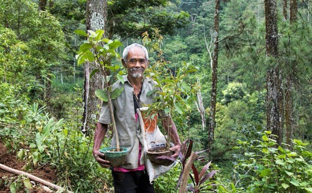 Индонезиец самостоятельно высадил более 11 тысяч деревьев, превратив засушливые холмы в зеленый оазис