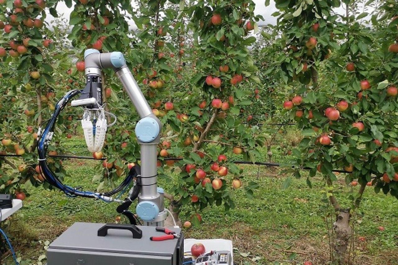 Робот для сбора фруктов, может собирать яблоки в садах на высокой скорости