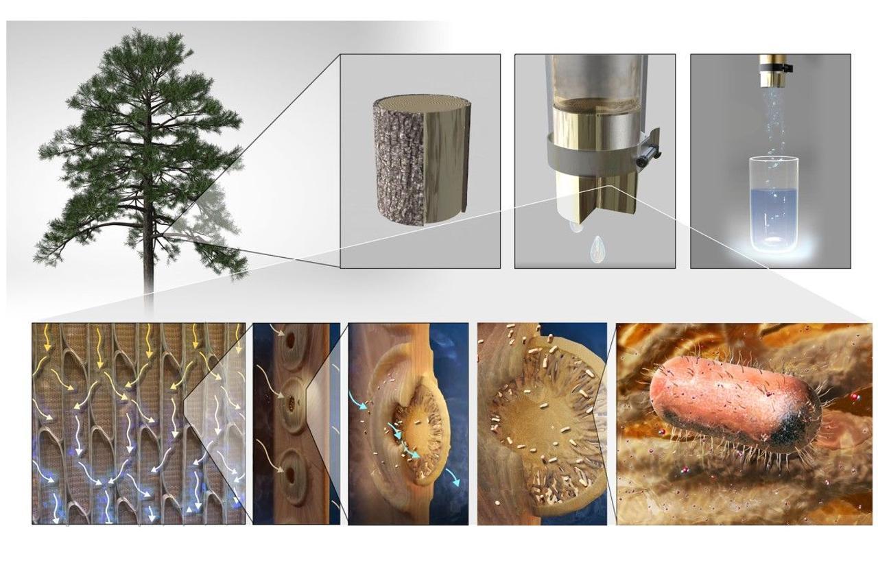 Ученые MIT создали самый дешевый «деревянный фильтр» для очистки грязной воды