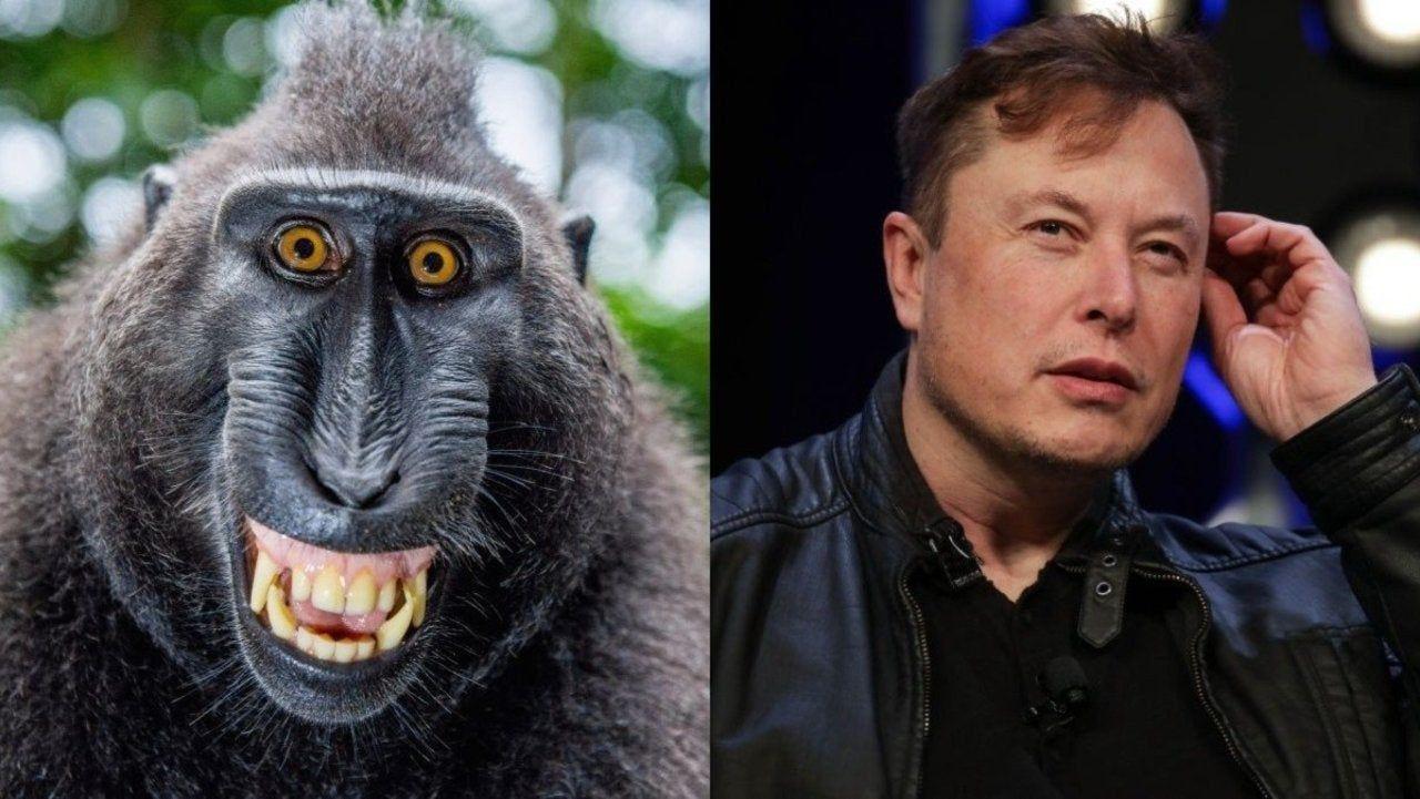 Мозговой имплант Neuralink Илона Маска научил обезьяну играть в понг с помощью мысли