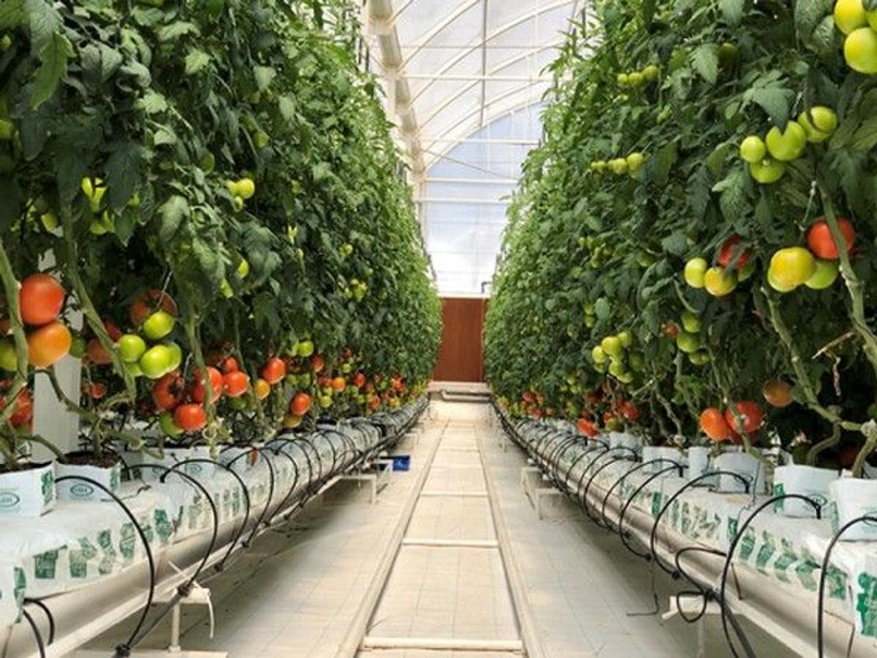 Panasonic разработал IT-теплицу для выращивания овощей, которой можно управлять за тысячи километров